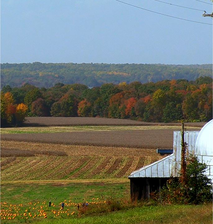 Tree leaves changing colors with a pumpkin patch in the foreground