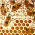 Bees and Honey Products