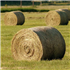 Hay, Straw and Grain
